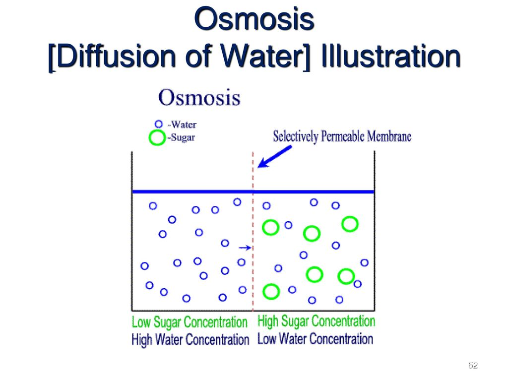 Topic the processes of the cell ppt download 52 osmosis diffusion pooptronica Choice Image